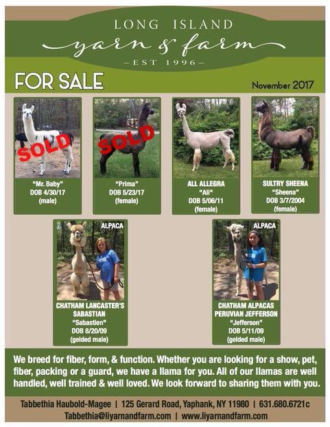 llama-and-alpaca-november-2017-update.png
